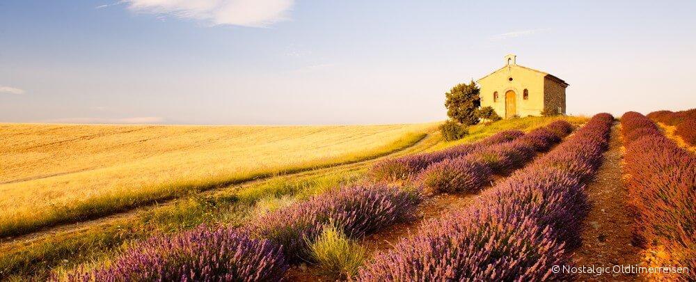 Lavendelfelder Lavendel Lavender lavande Provence | Nostalgic Oldtimerreisen